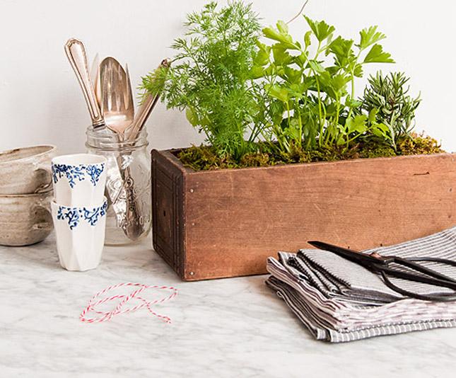 5 kitchen herb garden ideas wallspan